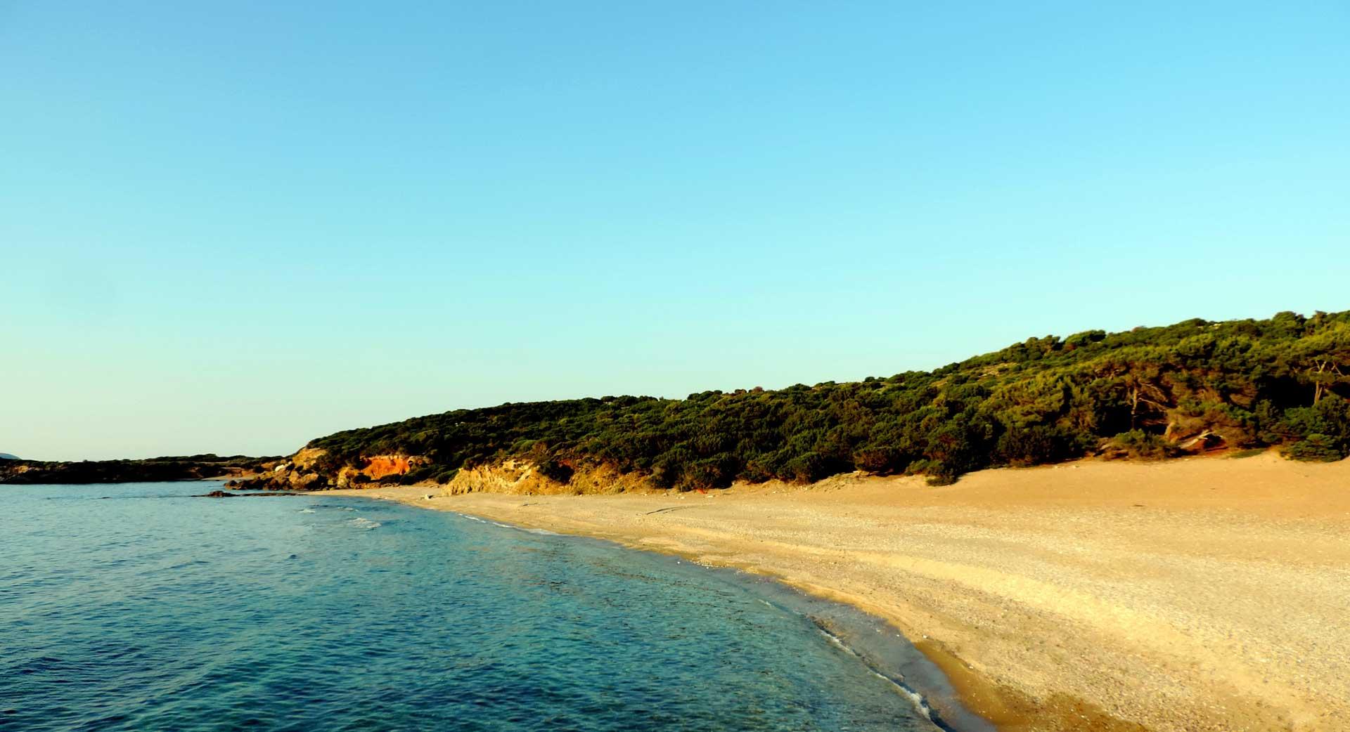 PINES ON A BEACH