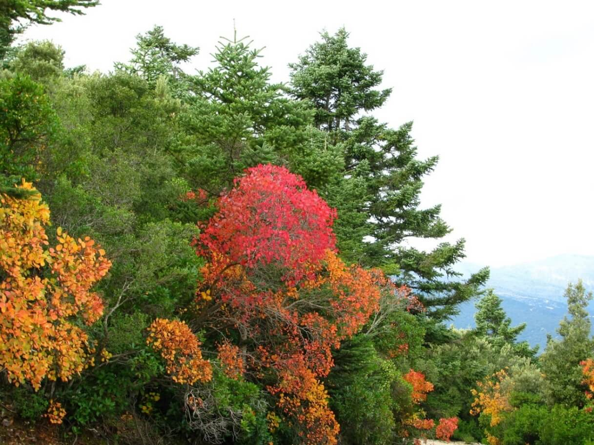 GREEN AND RED TREES